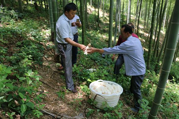 竹荪种植技术_—福建顺昌引进竹荪人工种植技术.