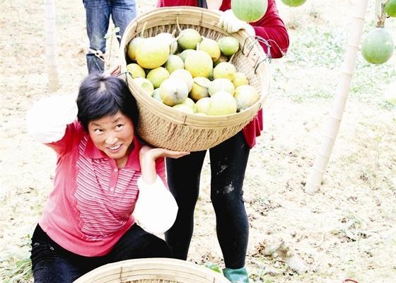 新型农业经营主体助推产业扶贫