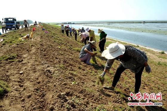 霍邱县沿岗河防洪治理二期工程有序推进