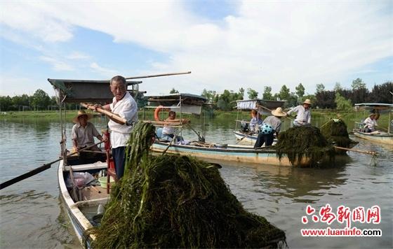 清理水草护河生态