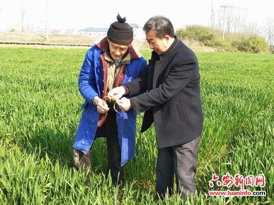 """霍邱宋店农技人员指导农户开展小麦""""三防一促""""活动"""