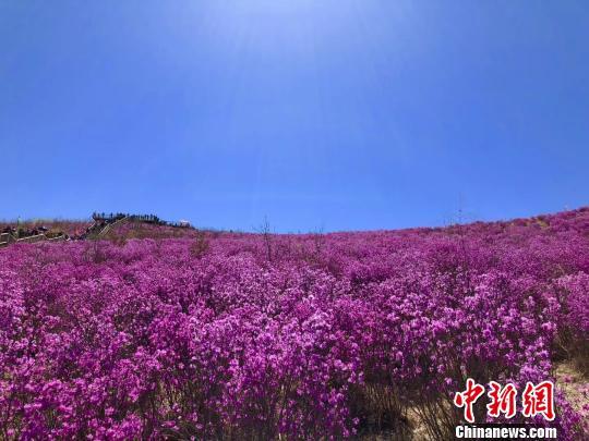 """内蒙古""""五一""""假期游客量破千万同比增长逾60%"""