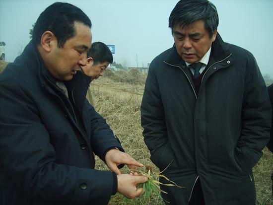 省农委到霍邱县检查抗旱和小麦田管工作