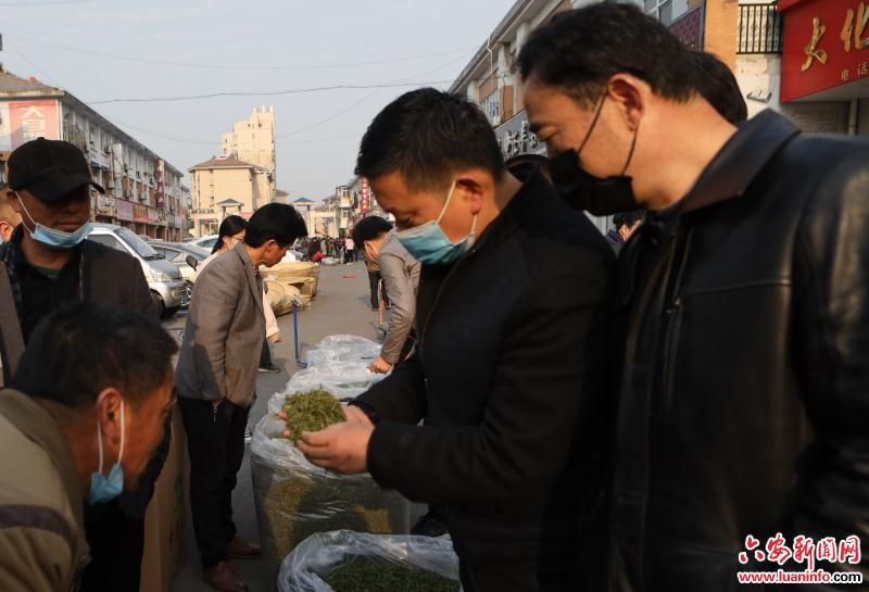 霍山黃(huang)芽ke)鮮線(xian)上銷售(shou)走俏(qiao)